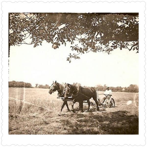 Travaux dans les champs